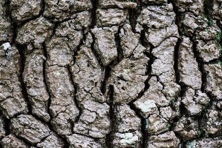 centric: Centric tree bark Stock Photo