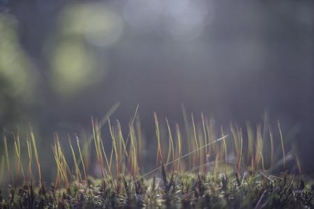 Obraz z runem le?nym przyrody w odcieniach niebieskich i ze ?wiat?em
