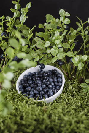 Blueberries in white bowl on the green moss Zdjęcie Seryjne