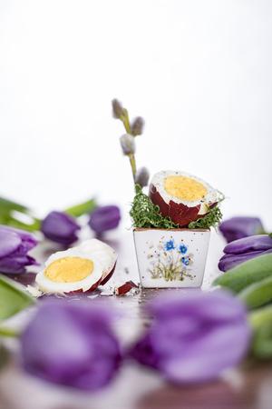 Wytnij Easter egg w czerwonej muszli z purpurowymi tulipanami. Weso?ych ?wi?t Wielkanocnych. Zdjęcie Seryjne