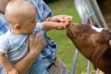 petting: Baby boy feeding petting animal Stock Photo