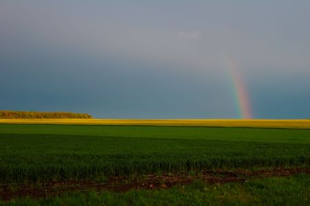 beautiful rainbow after an ungreater spring rain on a background poesvov rape Stock Photo - 4909002