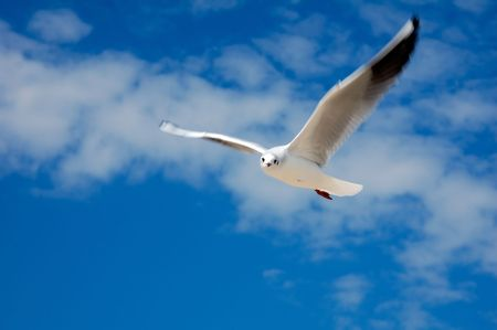 marine gulls are in nature, it is taken off in the middle of day, autumn