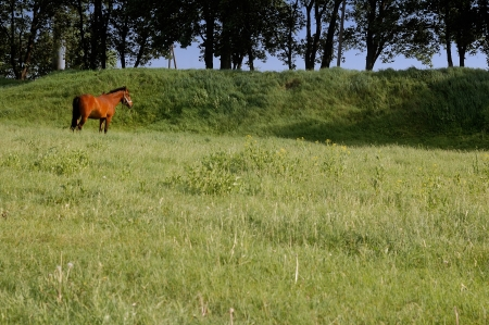 a horse is grazing on a green meadow, a summer day photo