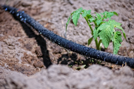trickling: black water trickling hose for drip irrigation