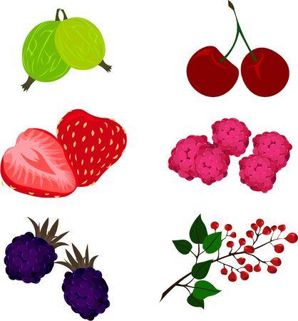 Set of berries: gooseberry, cherry, strawberry, raspberry, blackberry, lingonberry.