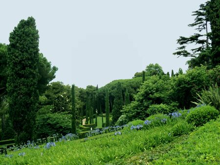 Summer park. Blue wildflowers. Relaxation. Banque d'images