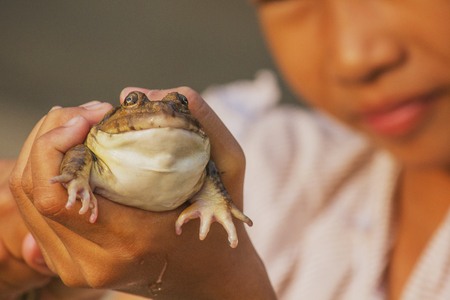 repulsive: The raising frogs in pond,Girls albino frogs show, albino frogs, Stock Photo
