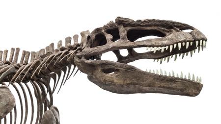 esqueleto: esqueleto de dinosaurio, tyrannosaurus rex aislado en fondo blanco