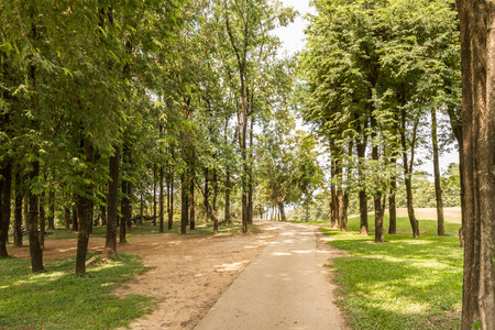 cut through: forest park with road cut through Stock Photo