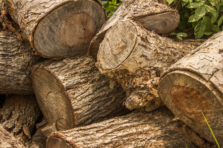 deforested: Cutting trees for firewood in Thailand. Stock Photo