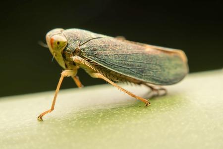 cicada green. Stock Photo