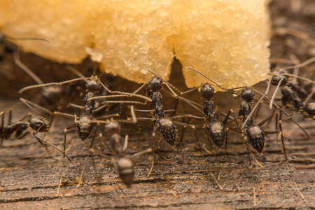 Black ants are spoiling food.