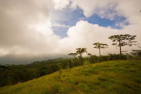 soi: pine tree forest at Phu Soi Dao national park Uttaradit province Thailand