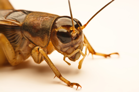 Close-up photo of the cricket gesture on the background