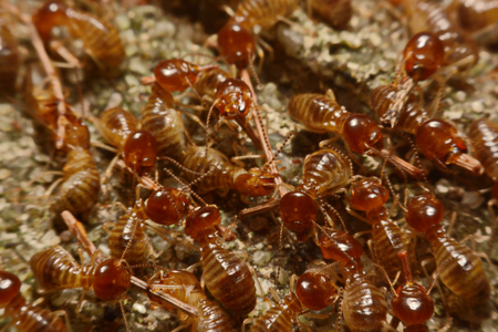 Termites work on the ground. Stock Photo