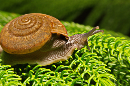 europeans: shows a snail crawling close-up
