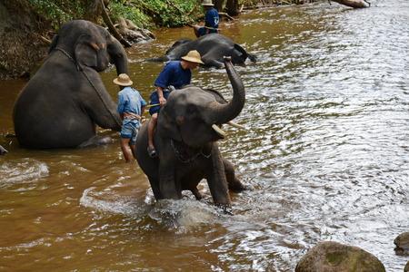 Unidentified people bathe elephants in Mae Sa Noi river at Mae Sa elephant camp in Chiang Mai, Thailand