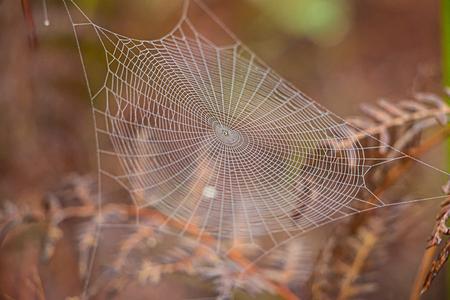 Spinnenweb op de boom. Stockfoto