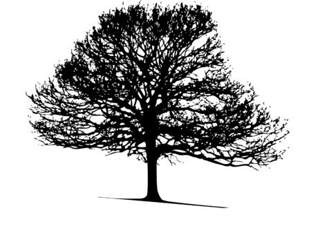 vector tree illustration Stock Vector - 3318346
