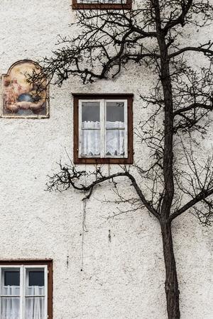 Tree climbing on the wall texture  photo