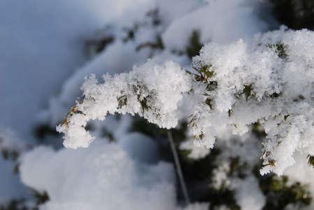 ジュニパーネットワークスの霜霜