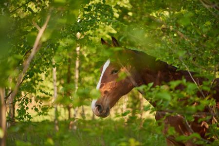 Very subtle horse