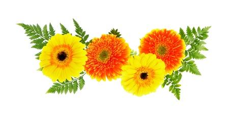 Yellow and orange daisies on a white background photo