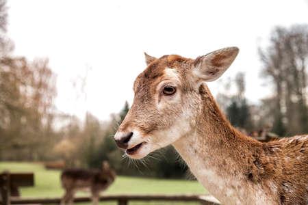 baby deer: Baby deer Stock Photo