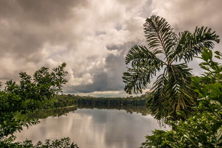View over lake in the Amazon Jungle photo