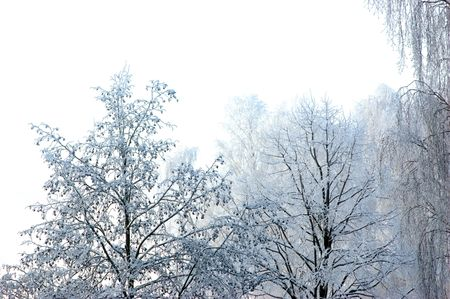 Perfect Winter day and New Snow, Isolated Stock Photo - 5993978
