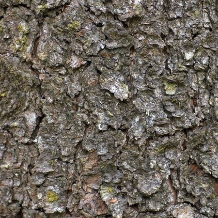 Grungy Bark Texture, Detailed Background Stock Photo - 6552285