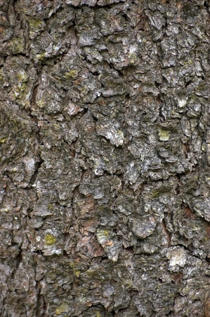 Grungy Bark Texture, Detailed Background Stock Photo - 12914323