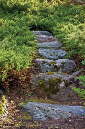 Stone pathway, granite rock stairway pavement path in summer garden, juniper growth closeup photo