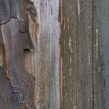 Old aged weathered grunge color-peel wood texture, detailed vertical macro closeup of natural textured grain grungy painted wooden plank fence board in brown, blue, grey copy space photo