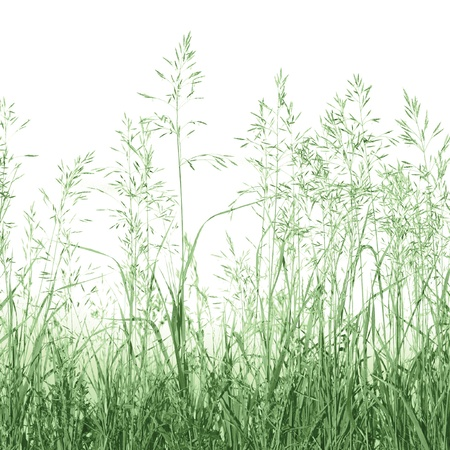 weeding: Detailed Abstract Meadow Grass Background Isolated On White