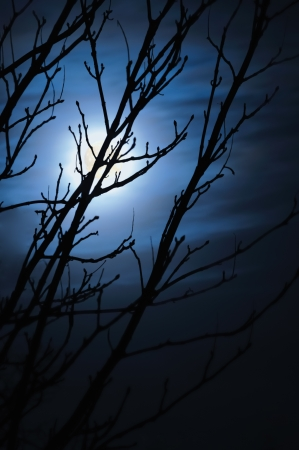 Full moon in foggy dark night, leafless trees silhouettes and clouds, halloween theme vertical background, scary moonlight scenery, vertical photo