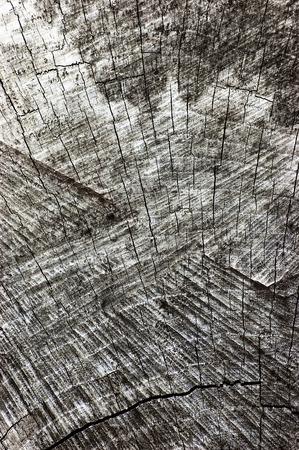 sawed: Natural Weathered Grey Tree Stump Cut Texture, Large Detailed Old Aged Gray Lumber Background Vertical Macro Closeup, Dark Black Textured Cracked Pattern
