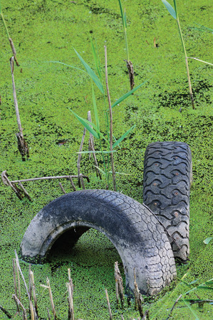 ecological problem: Discarded old tyres in contaminated pond puddle, water pollution concept, vertical green sweet grass duckweed manna-grass background texture pattern, gentle textured bokeh contamination metaphor Stock Photo