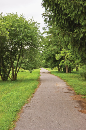 verdant: Old pathway in woods, aged weathered tarmac asphalt trail, large arboretum, peaceful tranquil verdant garden park walk pavement, various forest trees, bushes, shrubs, vertical greenery sidewalk landscape