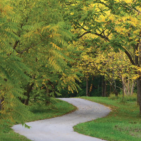 asphalt: Walnut Trees In Autumnal Park, Large Detailed Vertical Landscaped Autumn Path Scene, Twisting Tarmac Walkway, Winding Asphalt Road Zigzag Perspective, Walnuts Parkland Pavement, Fall Solitude Concept, Green Lawn
