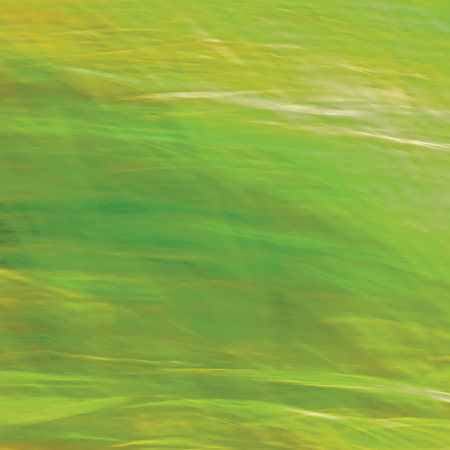 sere: Motion Blurred Bright Meadow Grass Background, Abstract Green, Yellow, Amber Horizontal Texture Pattern Copy Space