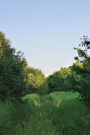 Deserted Abandoned Verdant Rural Woods Country Road Trail Perspective, Vehicle Tracks in Overgrown Wild Grass And Trees, Village Tree Forest, Impassable Countryside Off-road Path, Harsh Rough Terrain Landscape, Bright Blue Summer Evening Sunset Sky, Large Detailed Vertical Scenic Closeup
