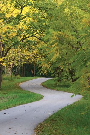 Walnut Trees In Autumnal Park, Large Detailed Vertical Landscaped Autumn Path Scene, Twisting Tarmac Walkway, Winding Asphalt Road Zigzag Perspective, Walnuts Parkland Pavement, Fall Solitude Concept, 스톡 콘텐츠