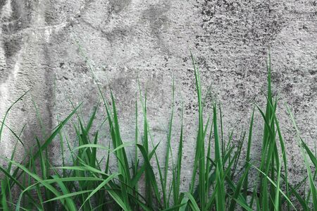 Dark Grey Coarse Concrete Stone Wall Texture, Green Grass, Horizontal Macro Closeup Old Aged Weathered Detailed Natural Gray Rustic Textured Grungy Stonewall Background Pattern Detail, Blank Empty Vintage Grunge Copy Space Stockfoto