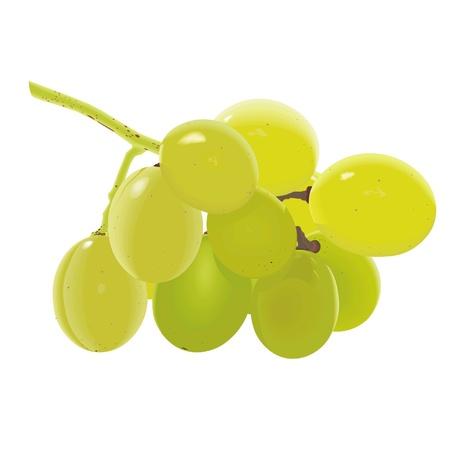 cluster: grapes Illustration