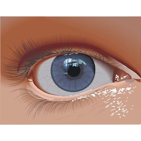 close up eyes: eye Illustration
