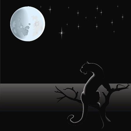 black jaguar: panther at the nights