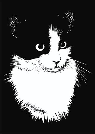 ojo de gato: gato