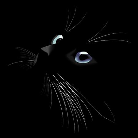 gato negro: gato